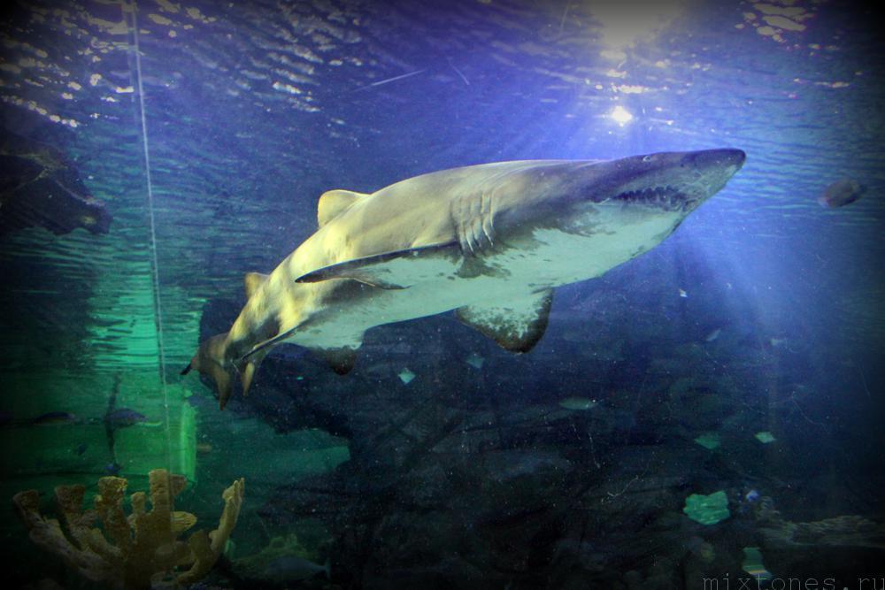 aquaria_shark1_