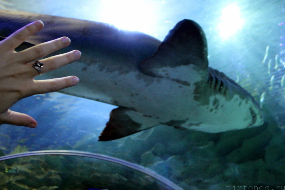 aquaria_shark