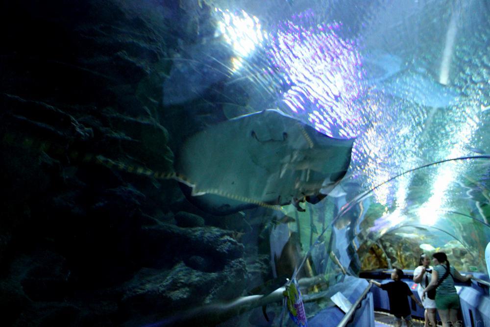 aquaria_skat