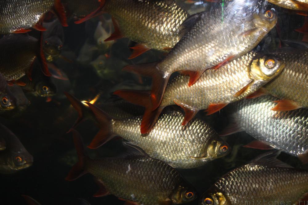 fishinblander
