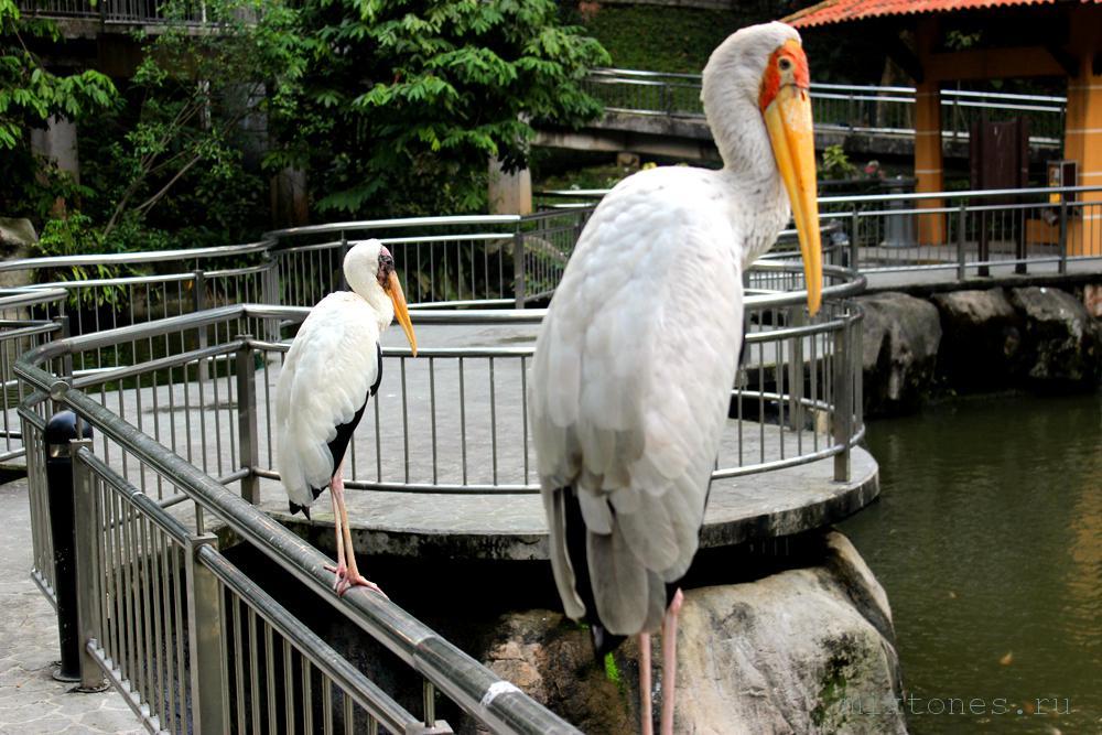 birdparkKL