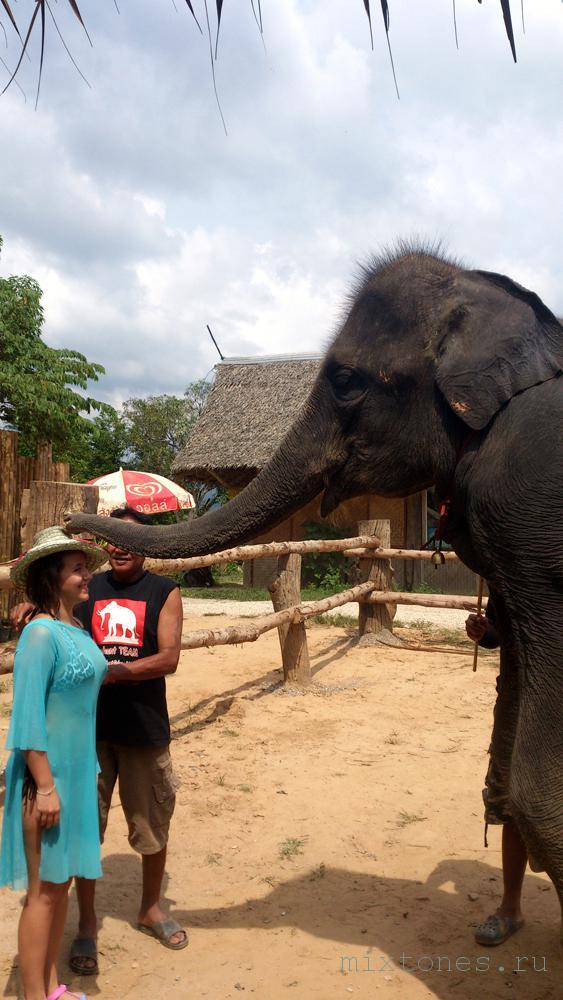 show-slonov