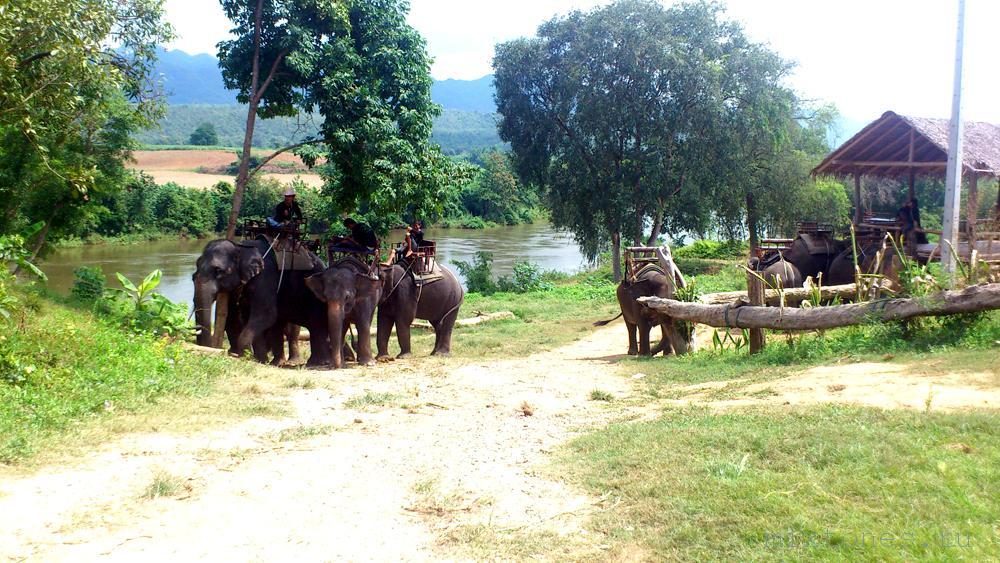 slon-ferma