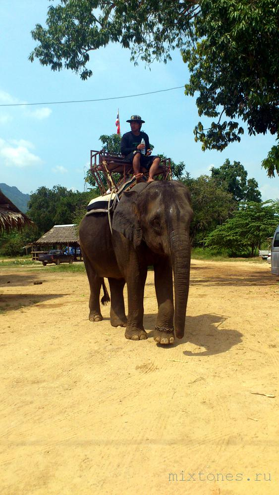 slon-v-thailande