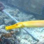 sipadan-diving1