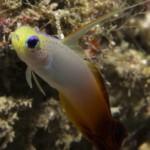 sipadan-diving11
