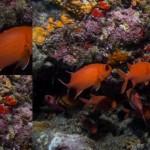 sipadan-diving13