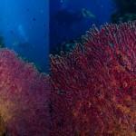 sipadan-diving18