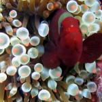sipadan-diving2