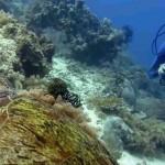 sipadan-diving21