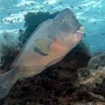 sipadan-diving22