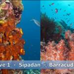 sipadan-diving25