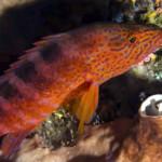 sipadan-diving9